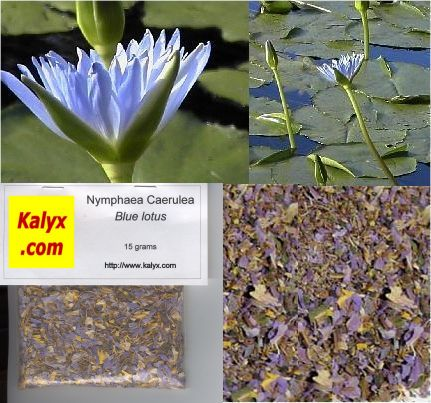 Blue Lotus of the Nile (Nymphaea caerulea): 15 gm: M
